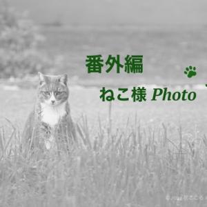 猫様に見つめられて。。。