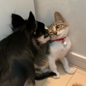 犬と猫との生活♪