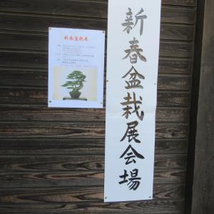 新春盆栽展へ行ってきました・・。