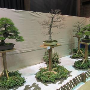 新春盆栽展へ行ってきました・・。パート2
