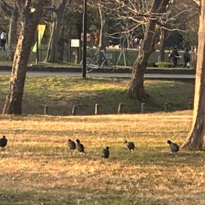 鳥たちからのメッセージと創作神話