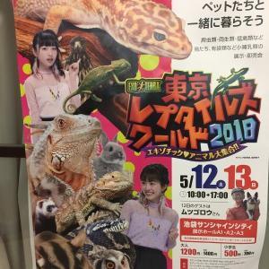 東京レプタイルズワールド2018(東レプ)レポート【前編】