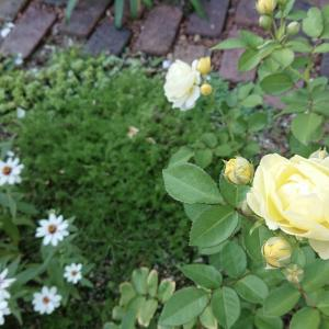庭の片隅で…夏を乗り越えた花達や挿し木