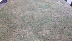 芝生(TM9) の成長記録 一年目