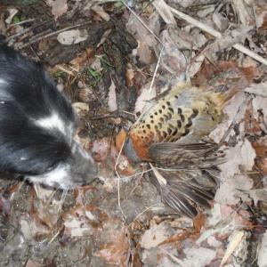 2019 若犬の猟体験