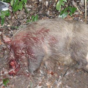 2019 猪猟