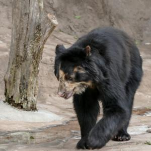 『熊を放つ』ジョン・アーヴィング 村上春樹訳 暫定的な時代に暫定的な年齢を送っているということ
