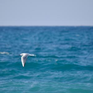 若山牧水『海の声』を鑑賞する
