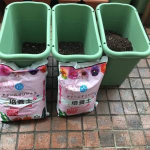 【プランター農園】根菜の種まき、植え付け
