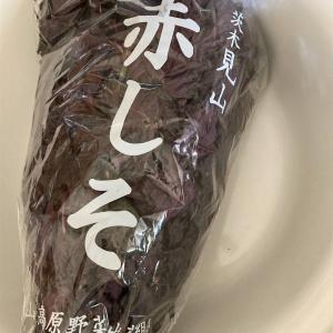【梅仕事】赤紫蘇漬け