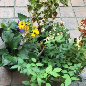 雨の合間の庭いじり