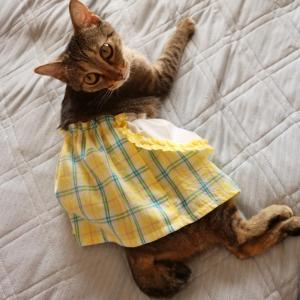 スカートをはいた猫