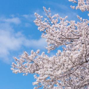 春期講習お休みになりました。