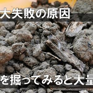 芝生失敗の原因を探る。床土を掘ってみたら大量の石【2020.8月】