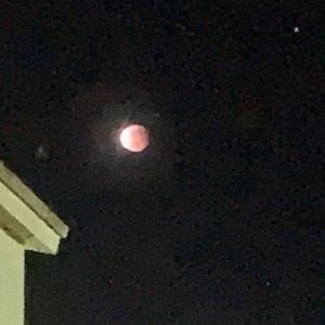 皆既月食観測