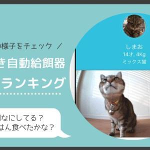 留守中の猫の様子をチェック!カメラ付きの自動給餌器おすすめランキング
