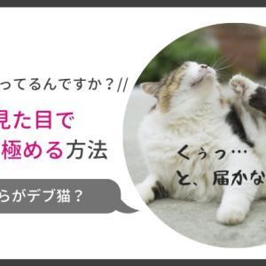 猫の肥満は見た目でわかる?!太っているかどうか判断する方法