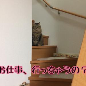 うちの猫はかわいい...くない時もあるの巻