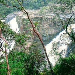 ・オーストラリア・360°ジャングル!緑に癒されるキュランダ③