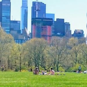 ・アメリカ・ピクニックにオススメ!セントラルパークのシープ メドー!ニューヨーク㉕