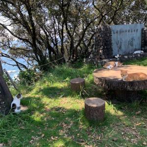 高知県土佐清水市 叶崎灯台と先っぽの海の迫力が凄かった!