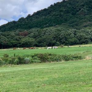真庭市 蒜山ジャージーランドにひまわり畑♪