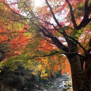 総社市 豪渓の紅葉