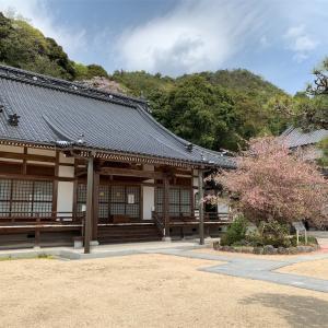 矢掛町 吉祥寺の海棠の花