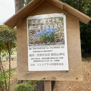 笠岡市 箱田山神社 エヒメアヤメは小さくて可愛かった!