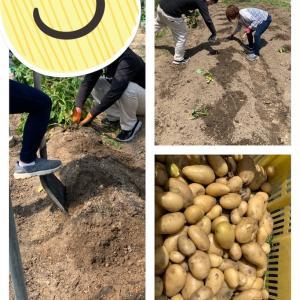 ジャガイモ収穫♪