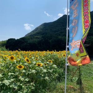 今年も岡山市北区牟佐のひまわり畑見に行きました♪