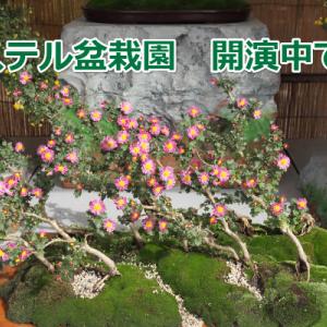 楽しい ぱすてる盆栽園