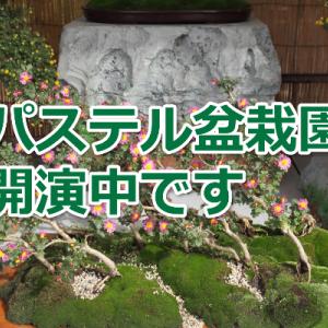 楽しい 九谷焼 ぱすてる盆栽園