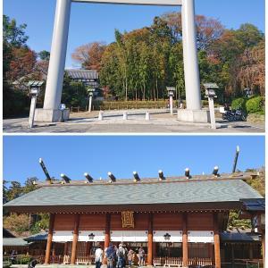 冬に咲く、櫻木神社の十月桜