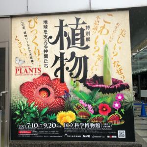 特別展「植物」