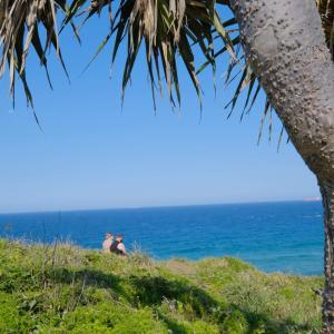 日本人の少ない都会、SunshineCoastのビーチ沿い力!