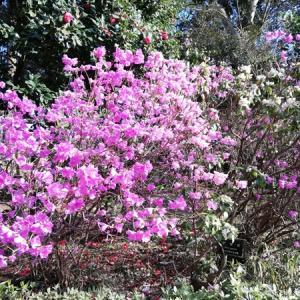 椿コーデで花と緑の振興センターの椿園に行きました♪