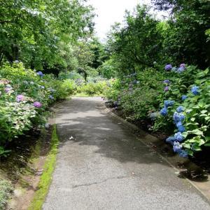 退院後初!!紫陽花コーデで紫陽花いっぱいの植物園へ。