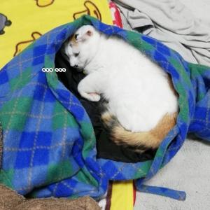 本日のみたらしさんwith NG~謎の人気スポット~
