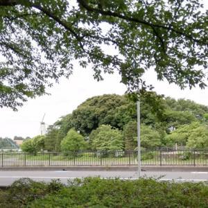 紫陽花コーデ・その1で大宮第二公園の紫陽花園に行ってみようと思ったら、変更を余儀なくされて近くの見晴公園へ。