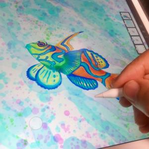 AdobeFrescoでニシキテグリのイラストを描いてみた