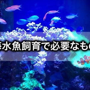 【海水魚の飼育に必要なもの】器具から用品までズラッと紹介