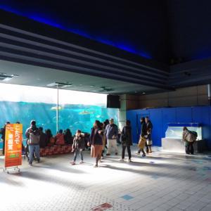 リニューアルするに須磨海浜水族園へ!今のうちに行っとこ