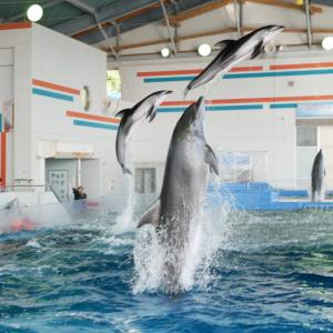 宮崎に水族館はないけれど、イルカショーが見られる観光施設「志布志湾大黒イルカランド」がある