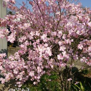 春の庭先(#^.^#)