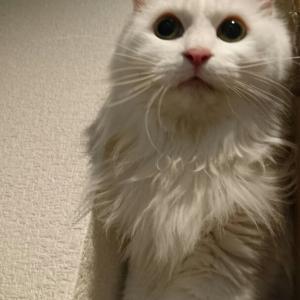 スキマに入った猫(=^・^=)