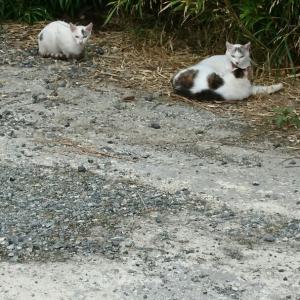 三匹の猫(=^・^=)