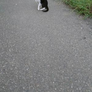 逃げない猫