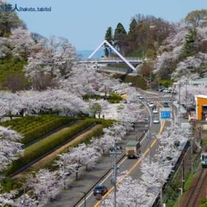 満開の桜を横に(西山公園にて)