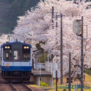 桜の駅(西岸にて)
